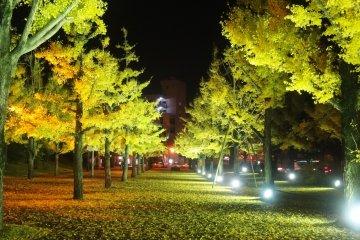 Осенняя иллюминация в Кумамото