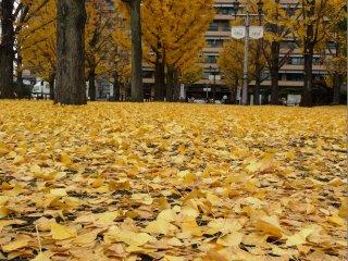 ... но, только что прошедшая, гроза прибила много листьев к земле.