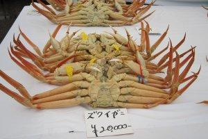 越前蟹、オスの「ズワイガニ」