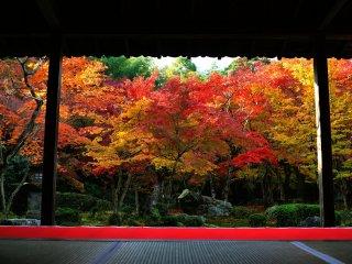 Kebun Ju-gyu (ten ocen) terlihat dari aula utama Hojo