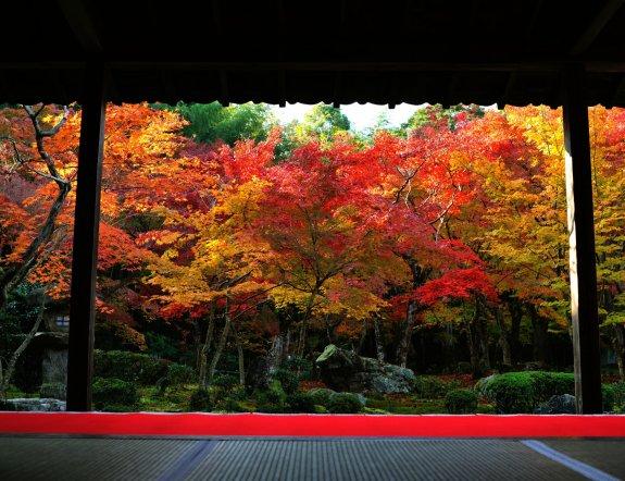 Lukisan Dedaunan Musim Gugur