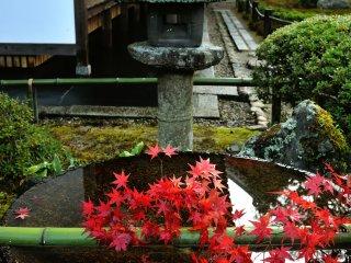Suikinkutsu (Water Koto Cave) dan lentera batu dengan warna merah pohon maple