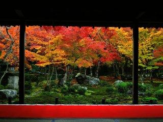 Karpet merah di luar beranda seharmoni dengan warna menyala dari dedaunan maple di kebun