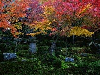 Kebun Ju-Gyu (ten oxen) pada pagi hari sebelum matahari naik ke atas