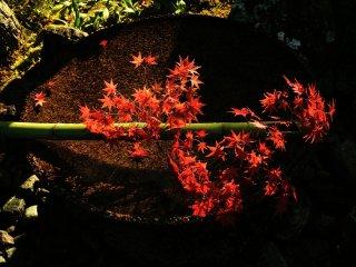 Suara gemericik air yang menggema di sekitar kebun