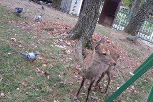 Salah satu rusa penghuni Nara Park.
