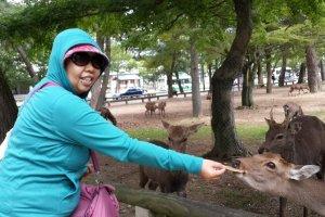 Akhirnya ada yang menawarkan diri menolongku mengabadikan momen bersama rusa.