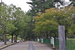 Nara Park dengan hijau daun yang menyegarkan mata