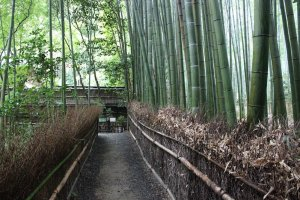 The teetering bamboo forest covers the garden in green