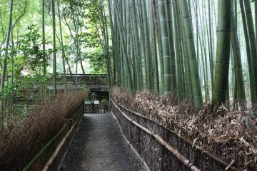 <p>The teetering bamboo forest covers the garden in green</p>