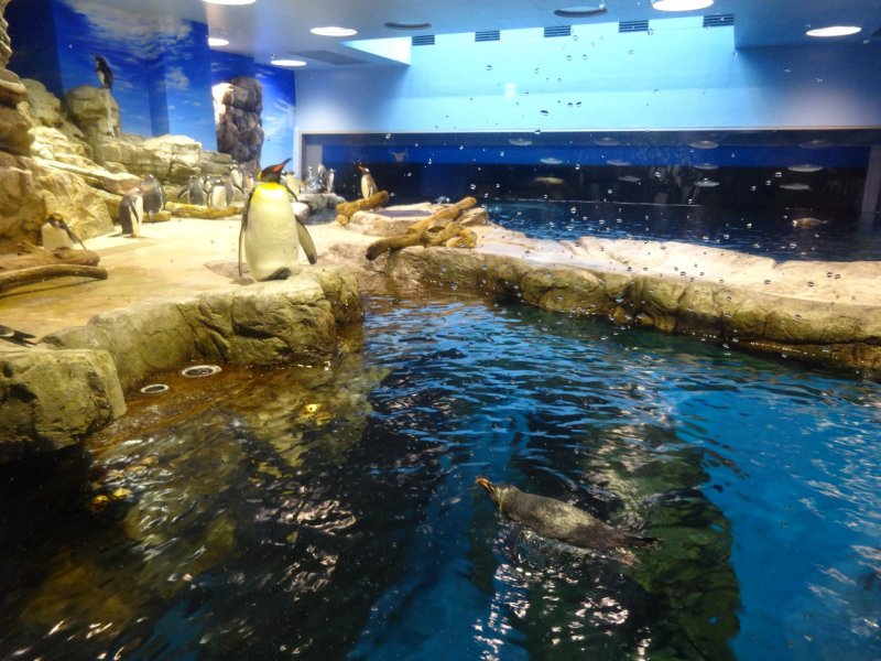 <p>The penguin exhibit at Shimonoseki Aquarium</p>
