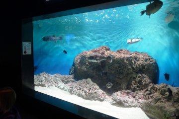 <p>A tank at the Shimonoseki&nbsp;Aquarium</p>