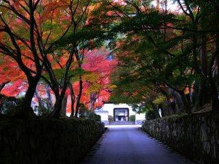 春には桜、山吹、姫ツツジなどが美しく咲く琴坂は秋の紅葉も一際輝く