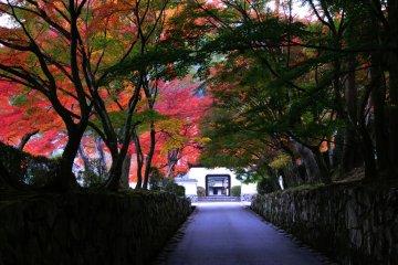 Dragon Palace Gate of Koshoji