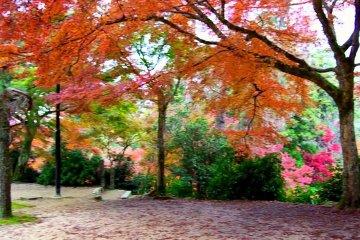 Parque Momijidani, Miyajima