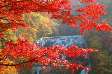 Fukuroda falls in all its fall glory