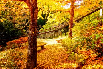 <p>An unexpected sight! On the slope leading up from Shinomaru Dam was this picturesque little rest area covered in rich beautiful autumn foliage</p>