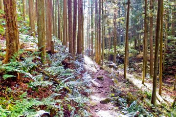 <p>As well as passing through many rivers and gorges, this trail also traverses through many picturesque forests</p>