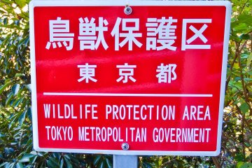 <p>Within this natural wilderness, it`s very easy to forget that you&#39;re still in Tokyo, (well at least technically!)</p>