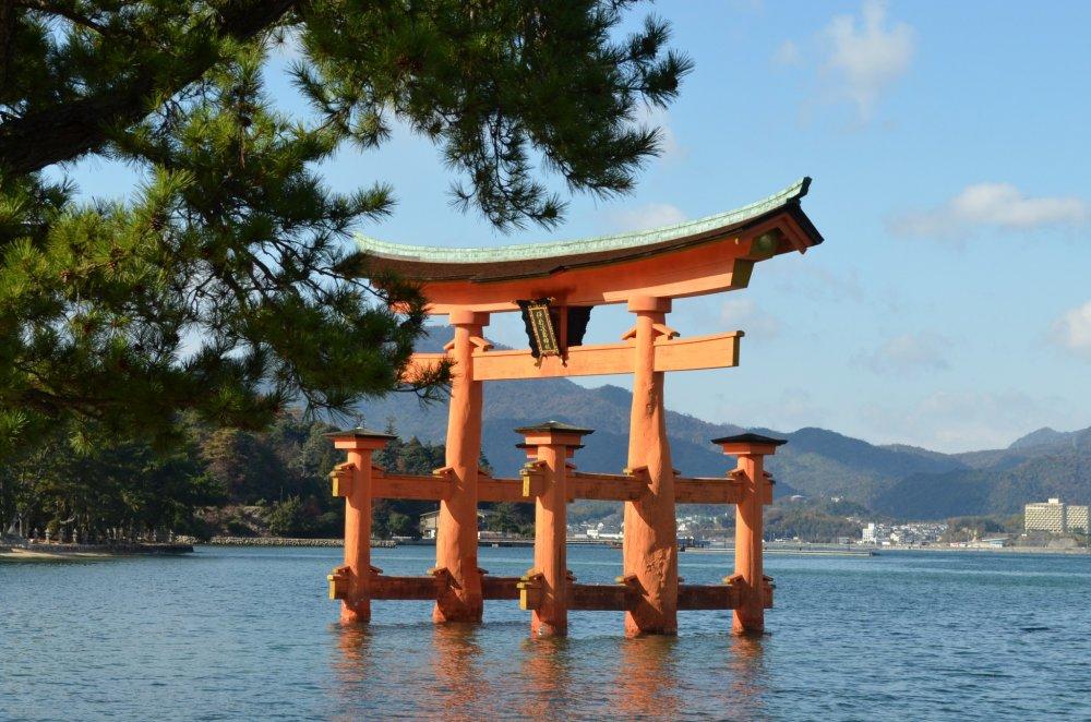 Pintu gerbang besar dari kuil Itsukushima di laut. Tingginya kira-kira 16,6 meter dan beratnya mencapai 60 ton sesuai dengan buku panduan. Ini merupakan salah satu yang sangat menarik dari Pulau Miyajima. Sungguh mengagumkan, pintu gerbang ini berdiri dengan beban seberat itu.