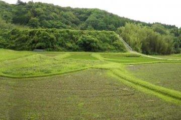 Looks like a well-manicured golf course
