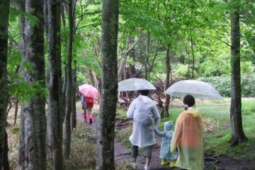 เดินป่าที่นิกโก้ท่ามกลางสายฝน