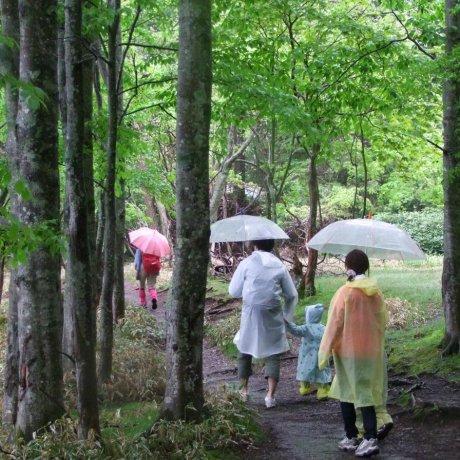 비오는 날에 닛코에서 등산하다