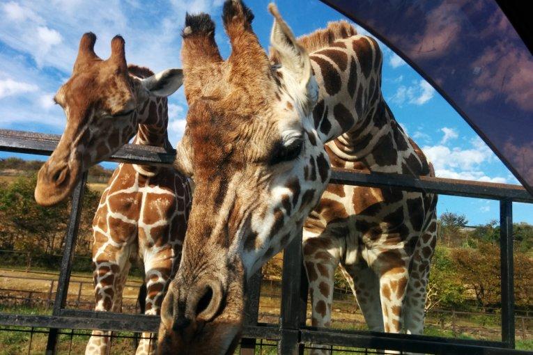 Động vật ở Công viên Safari Tohoku
