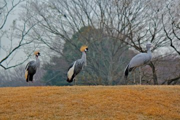 <p>It&#39;s not unusual to find the South African Cranes posing at the top of the hill</p>