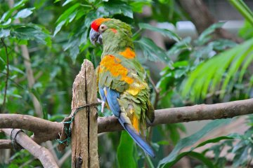 <p>One of the parrots in the rainforest located in the Zoological Hall</p>