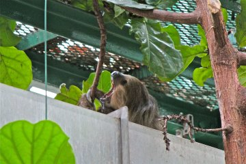 <p>Yawwwwwn! We discovered the Sloth relaxing on top of the duct because of the warm air.</p>