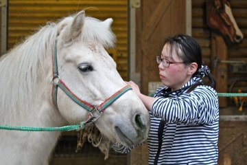 <p>A zookeeper brushes Judy, an all-white female horse.</p>