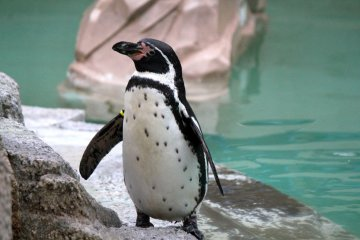 <p>Say &quot;hi&quot; to the penguins in the Children&#39;s Zoo area</p>