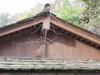 지붕은 판자로 쌓다. 경년 변화로 비가 새기도 했을 것이다