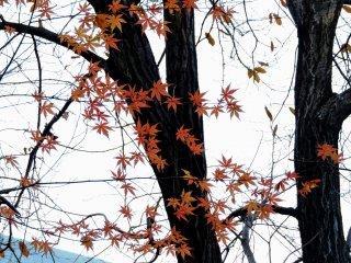 Folhas cor-de-laranja nos finais de Dezembro no jardim japonês doGrand Prince Hotel New Takanawa