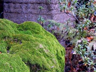 Musgo numa rocha no interior do jardim japonês