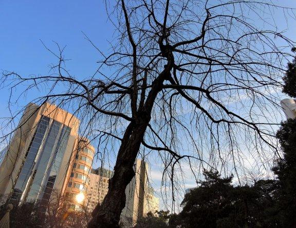 プリンスホテル新高輪の日本庭園