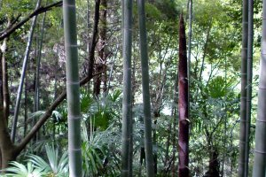 Vibrant plant life on Mt. Takanawa