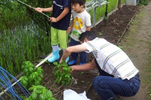 Tumbuh besar dengan lingkungan hijau