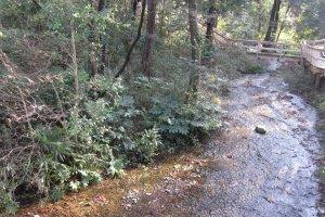 湧水がさらさらと流れてきます。山野草などを見つけることができます。