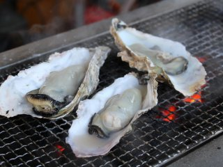 Grilling oysters outside Shiogama Fish Market