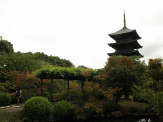 The majestic and serene TojiShrine