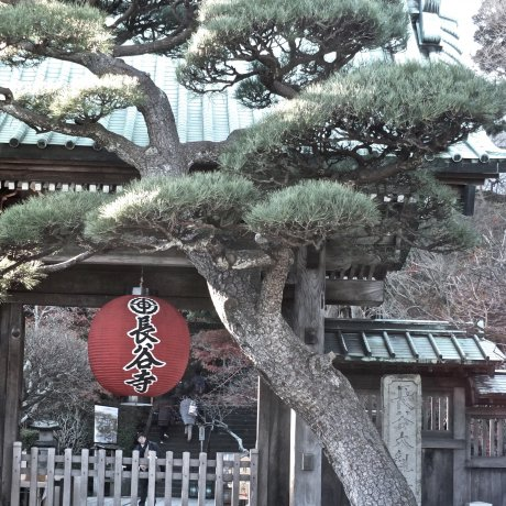 Kamakura's Hase Temple in January