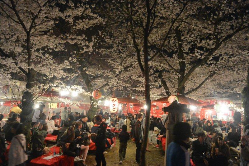 <p>Hirano Jinja&nbsp;scene at night during peak of sakura cherry blossoms.</p>