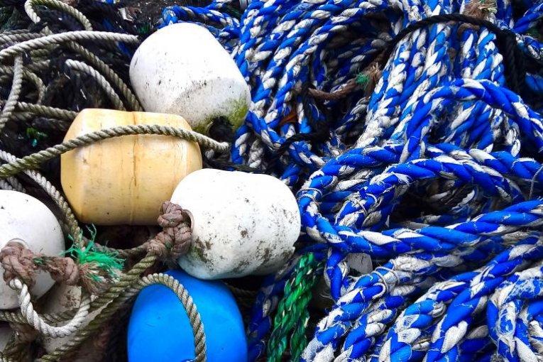 Kamakura's Koshigoe Fishing Port