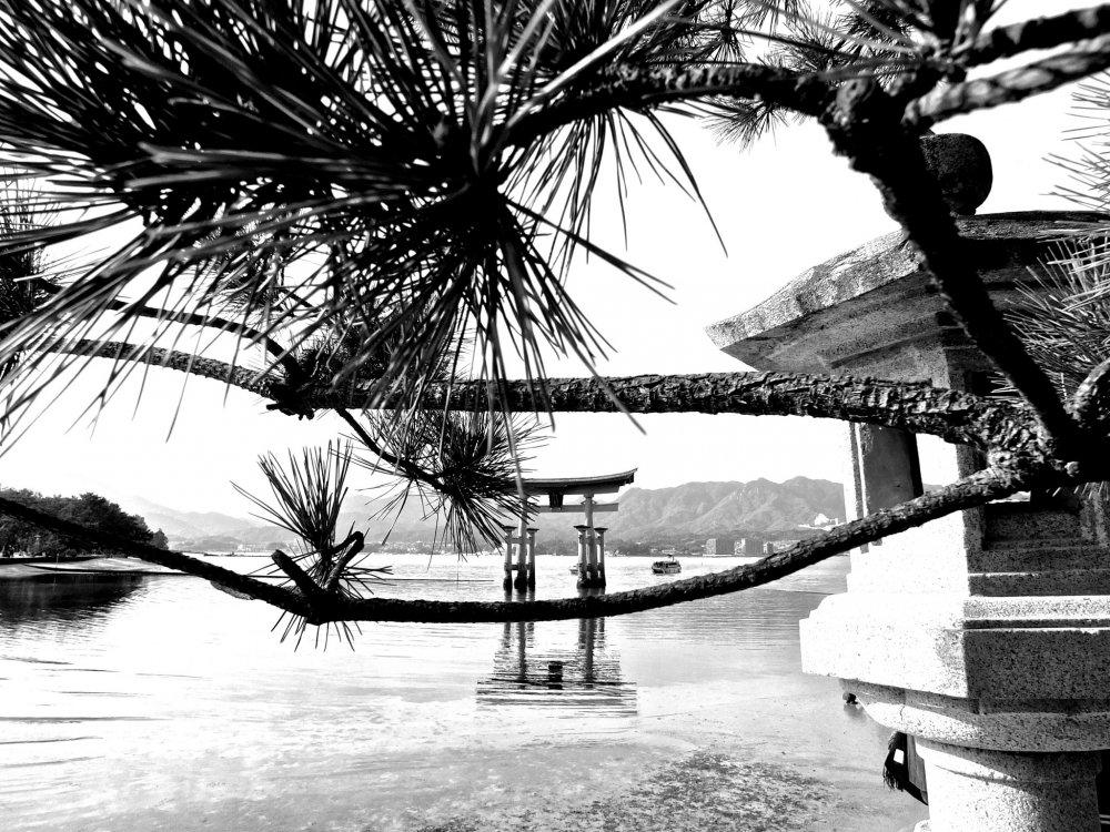 松林と石灯籠に彩られた宮島の入り江