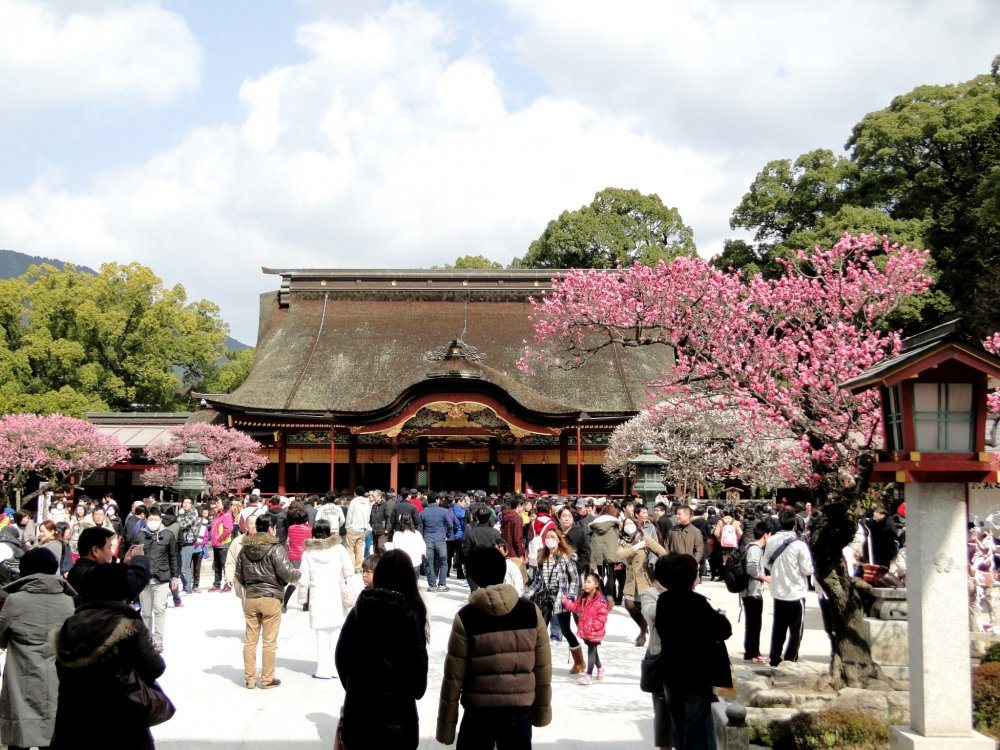 Plum blossoms outside the main hall of DazaifuTenmangu