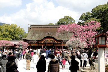 Plum Blossoms at Dazaifu