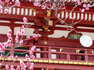 Plum blossoms against the shrine's main gate