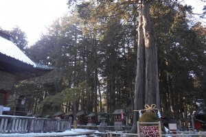 Beloved sacred trees